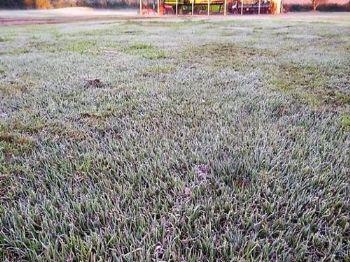 Vegetação sofreu com geada em Ponta Porã, por volta das 6h desta sexta-feira (Foto: Uniderp | Reprodução)