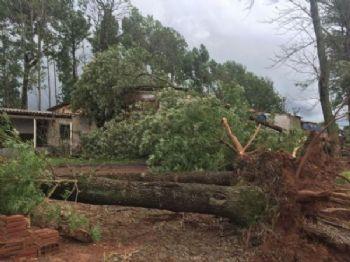 Fortes rajadas de vento causaram estragos em propriedade rural em Laguna Carapã. Foto: Arquivo Pessoal