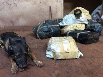 Cão farejador da polícia ao lado de fardos de maconha apreendidos em Dourados (Foto: Divulgação)
