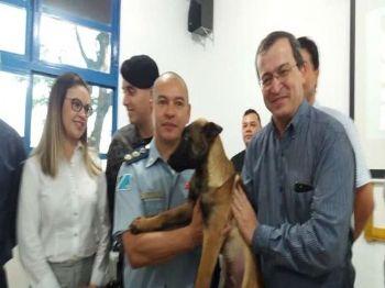 Cão pastor belga malinois doado ao Canil da PM de Dourados pelo banco Sicredi. Foto: Osvaldo Duarte