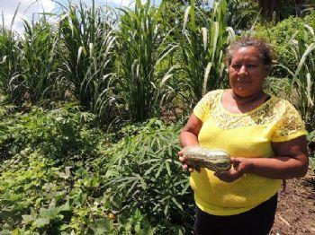 Pescadora produz maxixe, mandioca, abóboras em período de piracema - Foto: Raquel Brunelli d'Avila/Embrapa