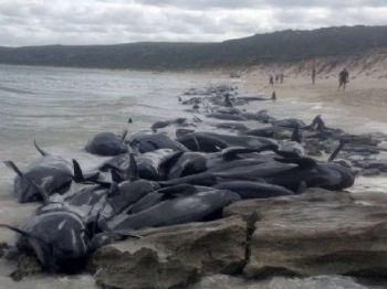 Foto: Divulgação / Departamento de Conservação da Biodiversidade e Atrações da Austrália Ocidental / AFP